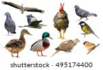 Collection of full length birds ...
