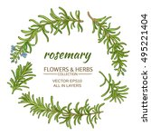 rosemary plant vector set on... | Shutterstock .eps vector #495221404
