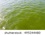 Blooming Green Water. Green...