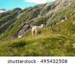 Small photo of Sheep on alpine glacier mountain and gauli house on the Alpine glacier mountains in switzerland