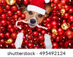 jack russell terrier  dog with... | Shutterstock . vector #495492124