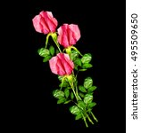 flower buds of roses isolated... | Shutterstock . vector #495509650