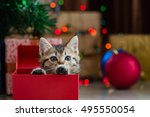 close up of cute brown tabby... | Shutterstock . vector #495550054