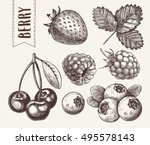 hand drawn sketch style berries ... | Shutterstock .eps vector #495578143