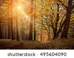 beautiful autumn view in forest. | Shutterstock . vector #495604090