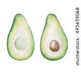 watercolor hand drawn avocado...   Shutterstock . vector #495659068