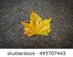 Single Golden Autumn Maple Lea...