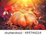 autumn halloween pumpkin.... | Shutterstock . vector #495744214