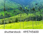 Landscape Of Wax Palm Trees In...
