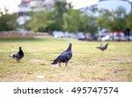 Summer Pigeon On The Street On...