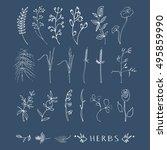 hand drawn simple herbs set... | Shutterstock .eps vector #495859990
