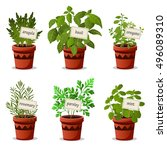 set of  culinary herbs in pots... | Shutterstock .eps vector #496089310