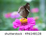 Butterflies And Flowers  A...