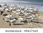 A Flock Of Seagulls Standing A...