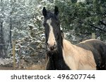 Shaggy Horse Stands Outside In...