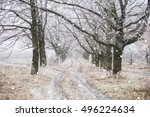 Small photo of Winter Park. Oak Alley. The leaves on the trees anymore. Snowfall.