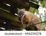 american bear | Shutterstock . vector #496259278