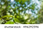 blue turquoise dragonfly on a... | Shutterstock . vector #496292596