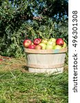 Small photo of Apple picking Apple orchard