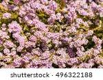 Closeup Of Tiny Pink Bush...