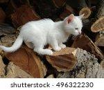 Stock photo white kitten playing on firewood 496322230