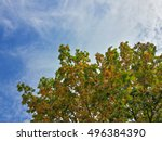 Beautiful Tops Of Autumn Trees...