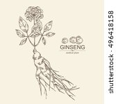 background with ginseng....   Shutterstock .eps vector #496418158