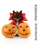 cat evil with fangs in red... | Shutterstock . vector #496430818