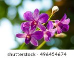 purple orchid   Shutterstock . vector #496454674