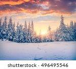 splendid christmas scene in the ... | Shutterstock . vector #496495546