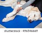 dog gets treatment | Shutterstock . vector #496546669
