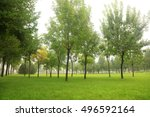 trees and grass in the park | Shutterstock . vector #496592164