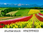 Panoramic Colorful Flower Fiel...
