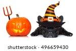 Halloween Devil French Bulldog...
