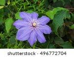 A Big Purple Flower In Garden...