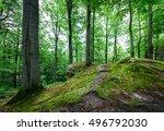 beech forest after a rain. | Shutterstock . vector #496792030