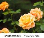 Stock photo rose rose rose 496798708
