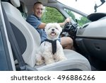 small dog maltese in a car his... | Shutterstock . vector #496886266