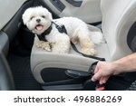 small dog maltese in a car his... | Shutterstock . vector #496886269