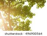 Sun Bursting Behind Tree