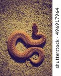 Small photo of Vintage photo of adder (Vipera Berus) basking on sun on sandy road. Dangerous snake.