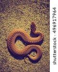 Small photo of Vintage photo of adder (Vipera Berus) basking on sun on sandy road. Dangerous snake.