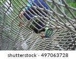 children climbing rope aerial... | Shutterstock . vector #497063728