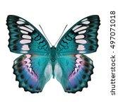 beautiful blue butterfly... | Shutterstock . vector #497071018