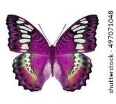 beautiful pink butterfly... | Shutterstock . vector #497071048