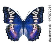 beautiful blue butterfly... | Shutterstock . vector #497071054