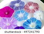 sky blue morning glory | Shutterstock . vector #497241790