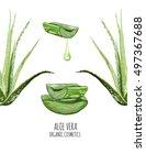 beautiful vector floral... | Shutterstock .eps vector #497367688