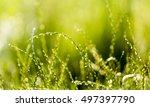 green grass background at... | Shutterstock . vector #497397790