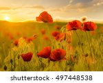 wildflowers poppies | Shutterstock . vector #497448538